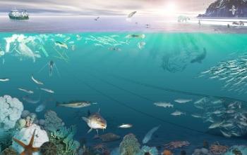 Effects of ocean & coastal acidification on marine life
