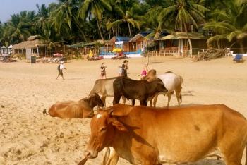 Future seems bleak for           Goa: paradise of old