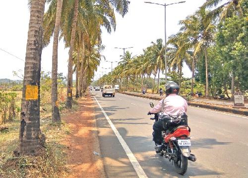 'Axe' effect for 200 palms along Guirim highway