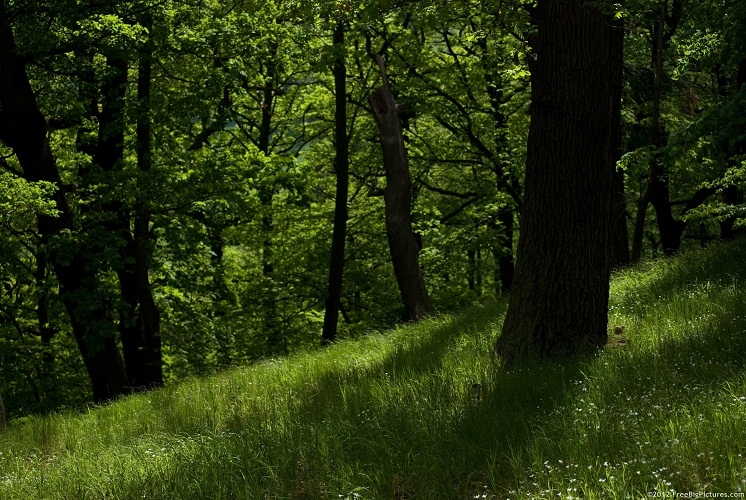 Govt, politicos bat for private forest owners