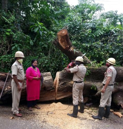 Finally, fallen tree trunk cleared at Azossim
