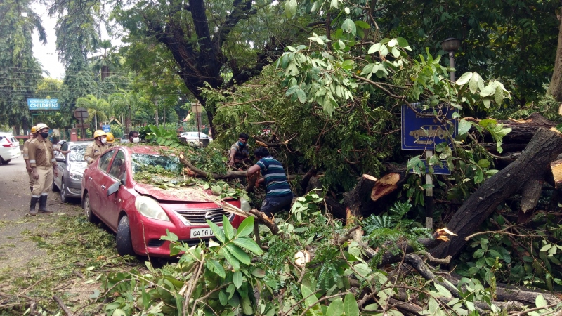 Large branch of tree falls on power pole, damages 3 parked cars in Vasco