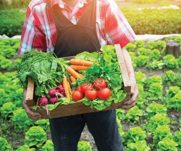 Food security and sustainability