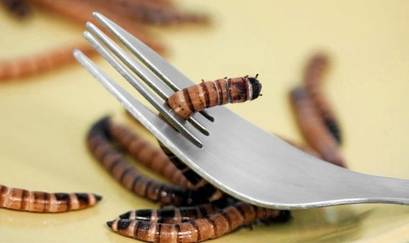 ON THE MENU: Combating malnutrition with maggots & kelp